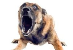 Dog with its mouth open