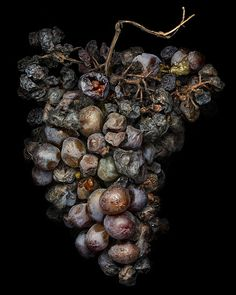 "the beauty of dehydrated grapes - peter lippmann. Reminds me of an article ""the beauty of roadkill"""