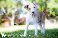 Cute Mutt Puppy  by Dogstreet