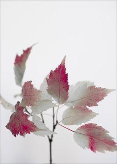 Autumn glint - C-print