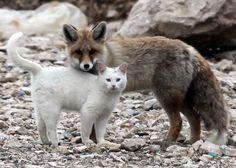 Fox & Cat Friend. So cute.