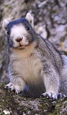 Beautiful squirrel
