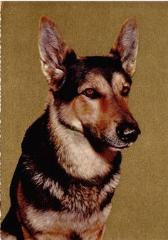 german sheperd vintage card with golden background