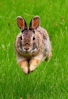 As far as possible, this post will concentrate on pest control tips that would assist keep away as much pests as you can. Some of the advises provided here will deal on specific pests but some may … Rabbit Diet, Rabbit Run, Wild Rabbit, Swamp Rabbit, Pet Rabbit, Hamsters, Rodents, Vivarium, Rabbit Repellent