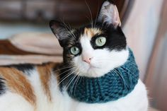 the Penelope // knitted scarf chunky cowl for cats // Kitty Cowl in aqua blue