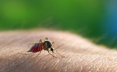Mosquitoes: 1 million people per year  According to the World Health Organization, mosquito bites kill 1 million people each year. Most of these are caused by malaria, though West Nile virus and dengue fever are also potentially deadly mosquito-borne diseases.