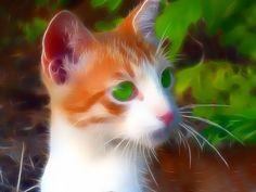 3D Fractal Art Cats   10 Superb Fractal Pictures Of Animals