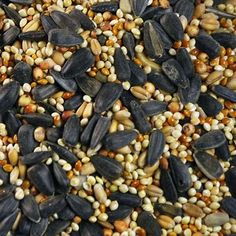 Bird's Favorite Wild Bird Seed Preferred No Corn Mix 25 lb Bag Wild Bird Food, Wild Birds, Tropical Birds, Exotic Birds, Pet Birds, Parrot, Seeds, Nutrition, Diversity