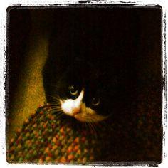 Tuxedo Cat.  Ke-Ke little sweetheart...