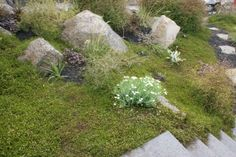 Natives - Xanthe White Planting, Gardening, Garden Of Earthly Delights, Natural Contour, Bright Flowers, Outdoor Living, Outdoor Decor, Lush Green, Native Plants