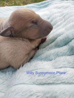 Italian Greyhound Puppies, Polar Bear, Places, Animals, Animales, Animaux, Animal, Animais, Lugares