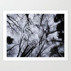 Black & White Forest Photo Art Print #artprint #forest #trees #blackandwhite #nature