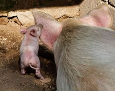 Loving Mother and Baby Animal Photos