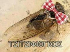 Τζιτζφιόγκος