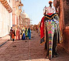 Amber Fort, Jaipur, India-- take me back to Rajasthan!