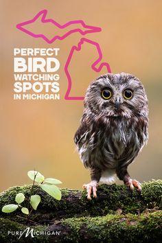 Find 12 amazing spots to go birding.