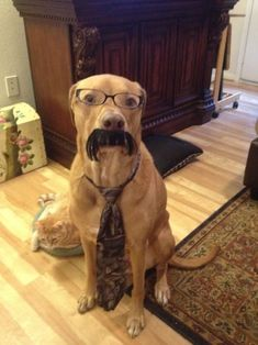 Dog with tie and moustache :)