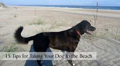 It's officially summer! If you've got a beach vacation coming up soon, check out these 15 practical tips for taking your dog to the beach!