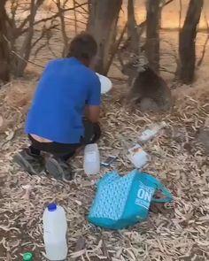Man and Koala - Angel. - Man and Koala Man and Koala - Funny Animal Videos, Cute Funny Animals, Funny Cute, Beautiful Creatures, Animals Beautiful, Animals And Pets, Baby Animals, Tier Fotos, Mundo Animal