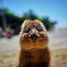 Baby Animals Super Cute, Cute Funny Animals, Happy Animals, Animals And Pets, Beautiful Creatures, Animals Beautiful, Animal Pictures, Cute Pictures, Worlds Cutest Animals