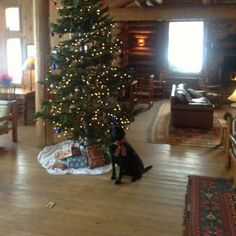 Moose celebrating Christmas with his Brooks Lake Lodge family. Make your reservation now to join us this year http://www.brookslake.com/index.php/booking-en