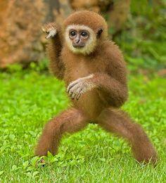 Kung-Fu Monkey 1