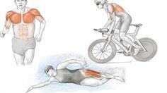 Anatomía del triatlón: el triatleta desde dentro   Guia triatlón   Sportlife.es