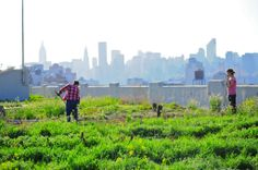 Apps For Urban Farmers — The Pop-Up City
