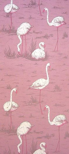 @Maria Canavello Mrasek Accardi Flamingos Wallpaper Pink white flamingoes on a pink background