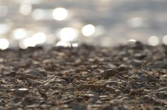 Glistening at the Beach