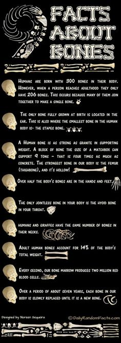 Great for classroom poster for an Anatomy/Physiology, Biology, otr middle school Life Science classroom - Bone Facts Forensische Anthropologie, Def Not, Forensic Anthropology, Anthropology Degree, Biological Anthropology, E Mc2, Medical Facts, Forensic Science, Medical Science