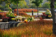 Niagara Parks Botanical Gardens, the entire area is planted with Japanese blood grass
