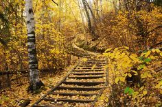 The fall colors in Edmonton's River Valley. Edmonton and the surrounding areas share one of the longest urban stretches of River Valley Parkland in an urban area in North America!