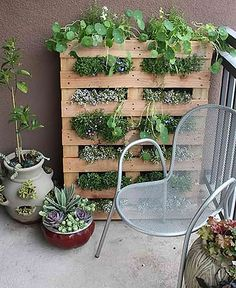 Increase growing space on a tiny balcony with this DIY pallet garden. Increase growing space on a tiny balcony with this DIY pallet garden. Container Gardening, Gardening Tips, Organic Gardening, Urban Gardening, Balcony Gardening, Balcony Planters, Garden Pond, Indoor Gardening, Hanging Planters