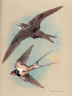 """.Zwaluw want het oude gezegde zegt: """"Waar een zwaluw zijn nest bouwt, zal voorspoed heersen en zal de bliksem niet inslaan."""""""