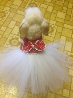 Red and White Polka Dot Couture Pet Dress Tutu w/ by BurrBoutique, $55.00