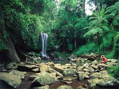 NOT New Zealand.  This is verified as  Mount Tamborine, Gold Coast Hinterland, Queensland, Australia.  This image is from Megan McDonough, travel writer of BohemianTrails.com   Researched and Verified 02 April 2015, by Bill Gibson-Patmore   @BillGP  Bill ✔️