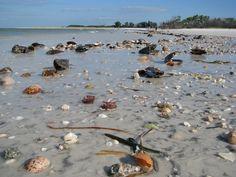 shells on Fort Desoto Beach