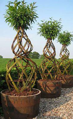 Living art in form of trees woven from living willow Container Plants, Container Gardening, Landscape Design, Garden Design, Garden Structures, Trees And Shrubs, Dream Garden, Garden Inspiration, Garden Pots