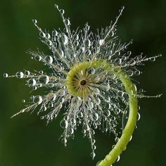 """The harmony of the world is made manifest in Form and Number, and the heart and soul and all the poetry of Natural Philosophy are embodied in the concept of mathematical beauty."" D'Arcy Wentworth Thompson photo: tristan robin blakeman spiral of the morning dew"