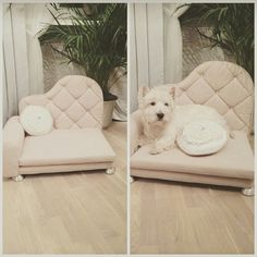 Sofa dla psa