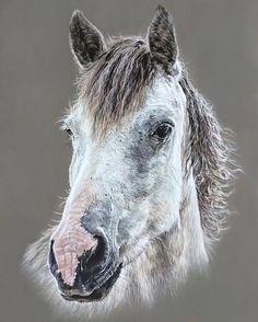 Pasteldrawing on 30x40cm pastelmat. www.portretinbeel... #horsedrawing #horseart #animallovers #pasteldrawing #pastelpensils #animalart #artistic_unity #softpastel #artworks #animallovers #instadraw #instadrawing #artmagzz #artfeedr #artforlife #realisticdrawings #instadraw #instadrawing #artfeedr #artforlife