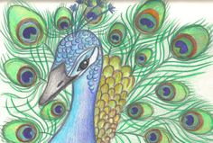 Pauw Bird Drawings, Animal Drawings, 5th Grade Art, Peacock Feathers, Art Lessons, Animals And Pets, Coloring Pages, Mosaic, Watercolor