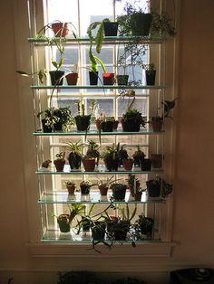 28 DIY Wall Shelves Hanging Storage and Organizing Ideas Window Plants, Window Shelves, Window Decor, Glass Shelves Kitchen, Window Design, Glass Shelves, Plant Shelves, Window Shelf For Plants, Glass Shelves Decor