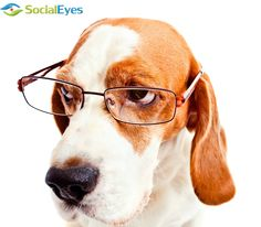 Dogs in glasses! #optometry