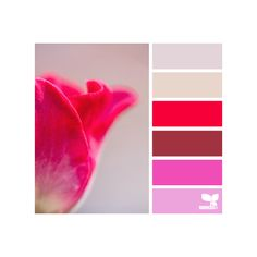 Design Seeds for all who color ❤ liked on Polyvore featuring design seeds, colors, backgrounds, color palette and color schemes