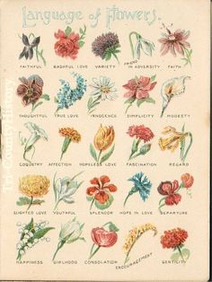 "A page from a Chase and Sanborn Ad booklet  explains part of the floral dictionary called  the ""Language of Flowers"""