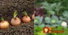 Archívy Dom & záhrada - Page 12 of 260 - To je nápad! Cantaloupe, Fruit