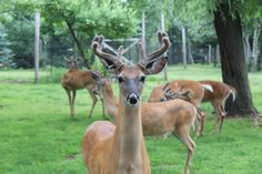The Wisconsin Deer Park in the Wisconsin Dells is one of our favorite attractions in the region:   http://www.wisconsinparent.com/wisconsin-deer-park-wisconsin-dells/  #WisconsinDells