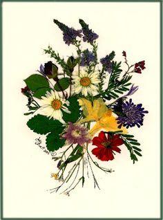 89 Besten Herbarium Bilder Auf Pinterest Flower Preservation